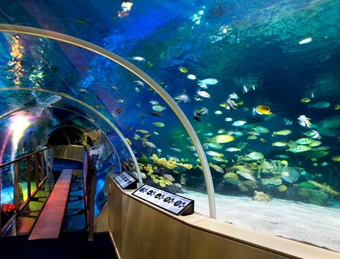 London Sealife Aquarium