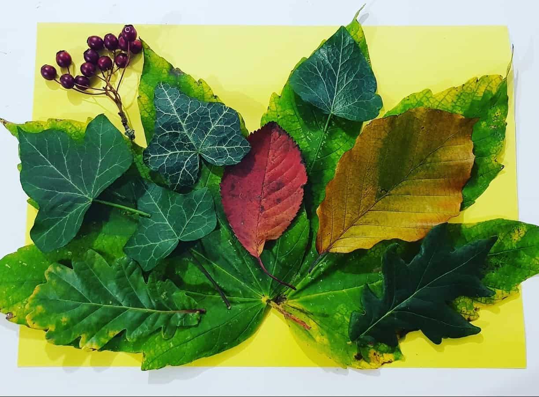 Leaf design leaf activities