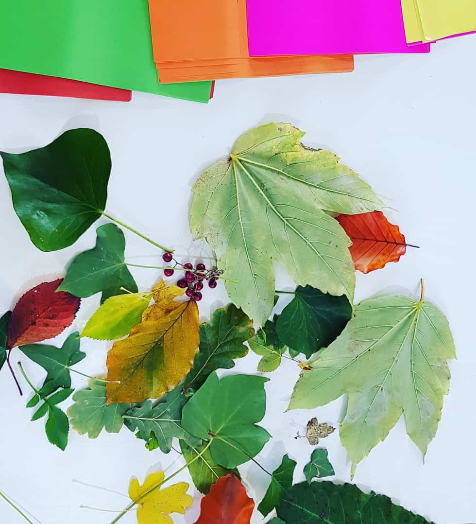 Autumnal Leaves for art project