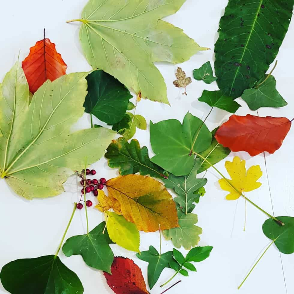Leaves for art project